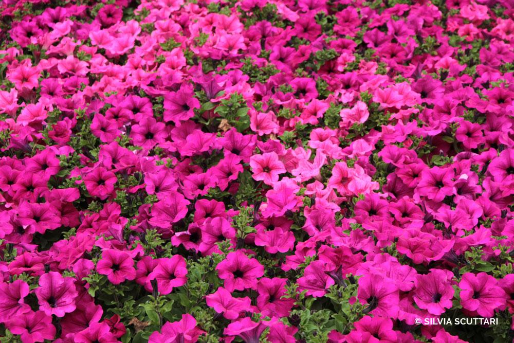 fiori_page_01